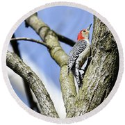 Red-bellied Woodpecker Round Beach Towel by Gary Wightman