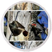 Red Bellied Woodpecker Harassed By A Starling Round Beach Towel