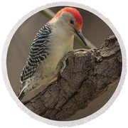 Red-bellied Woodpecker Img 1 Round Beach Towel
