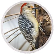 Red Bellied Woodpecker Img 6 Round Beach Towel
