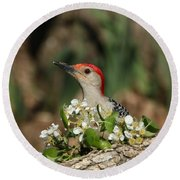 Red-bellied Woodpecker In Spring Round Beach Towel
