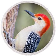 Red-bellied Woodpecker Round Beach Towel