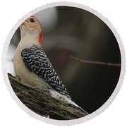 Red-bellied Woodpecker Round Beach Towel by Living Color Photography Lorraine Lynch