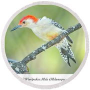 Red Bellied Woodpecker, Male Round Beach Towel