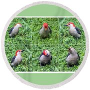 Red-bellied Woodpecker Posing In The Grass Round Beach Towel