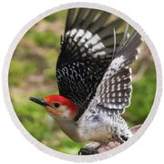 Round Beach Towel featuring the photograph Red Bellied Woodpecker Take Off by Terry DeLuco