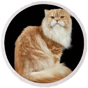 Red Big Adult Persian Cat Angry Sits And Turned Back On Black  Round Beach Towel