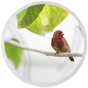 Round Beach Towel featuring the photograph Red Bird by Raphael Lopez