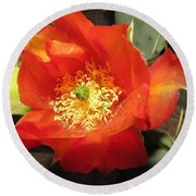 Red Bloom 1 - Prickly Pear Cactus Round Beach Towel