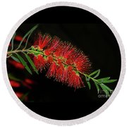 Round Beach Towel featuring the photograph Red Bottlebrush By Kaye Menner by Kaye Menner