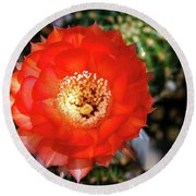 Red Cactus Bloom Round Beach Towel