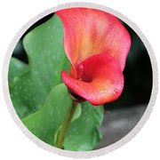 Red Calla Lily Round Beach Towel