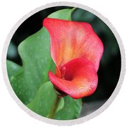 Round Beach Towel featuring the photograph Red Calla Lily by Katie Wing Vigil