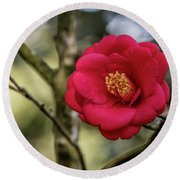 Round Beach Towel featuring the photograph Red Camelia 05 by Gregory Daley  PPSA