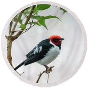 Red Capped Cardinal 2 Round Beach Towel