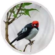 Red Capped Cardinal Round Beach Towel