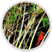 Red Cardinal In Hawaiian Bamboo Forest  Round Beach Towel
