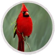 Red Cardinal Painting Round Beach Towel