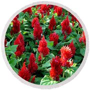 Round Beach Towel featuring the photograph Red Celosia Garden by Glenn McCarthy Art and Photography