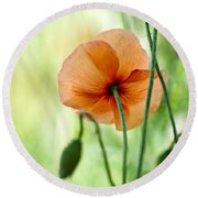 Red Corn Poppy Flowers 02 Round Beach Towel