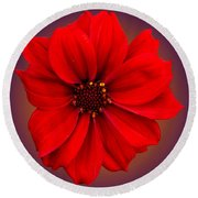 Round Beach Towel featuring the photograph Red Dahlia-bishop-of-llandaff by Brian Roscorla