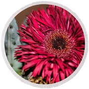 Round Beach Towel featuring the photograph Red Daisy And The Cactus by Diana Mary Sharpton