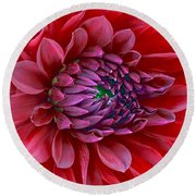 Red Dalia Up Close Round Beach Towel