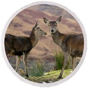 Red Deer Fawns Round Beach Towel