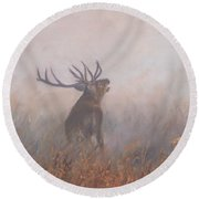 Red Deer Stag Early Morning Round Beach Towel by David Stribbling