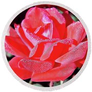 Red - Dew Covered  - Rose Round Beach Towel