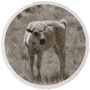 Round Beach Towel featuring the photograph Red Dog Buffalo Calf by Rebecca Margraf