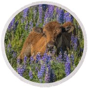 Red Dog In Bed Of Lupine Round Beach Towel by Yeates Photography