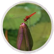 Red Dragonfly At Lady Buddha Round Beach Towel