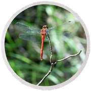 Round Beach Towel featuring the photograph Red Dragonfly by Karen Silvestri
