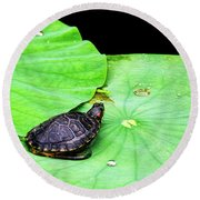 Red-eared Slider Round Beach Towel
