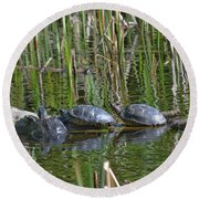 Red Eared Slider Turtles Round Beach Towel