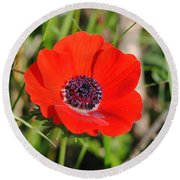 Red Anemone Coronaria 4 Round Beach Towel