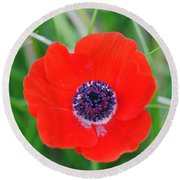 Red Anemone Coronaria 3 Round Beach Towel