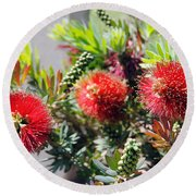 Callistemon - Bottle Brush 6 Round Beach Towel