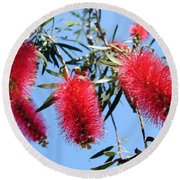 Callistemon - Bottle Brush 3 Round Beach Towel