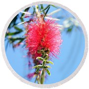 Callistemon - Bottle Brush 1 Round Beach Towel