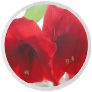 Round Beach Towel featuring the photograph Amaryllis by Rebecca Harman