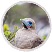 Red Footed Booby Closeup Round Beach Towel by Jess Kraft