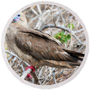 Red Footed Booby Round Beach Towel by Jess Kraft