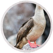 Red Footed Booby Vertical Round Beach Towel by Jess Kraft
