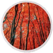 Red Forest Of Sunlight Round Beach Towel