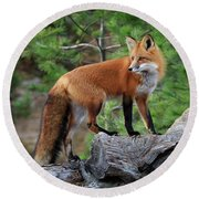 Red Fox 4 Round Beach Towel by Gary Hall