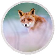Red Fox In A Mysterious World Round Beach Towel