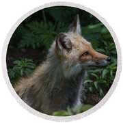 Red Fox In The Forest Round Beach Towel