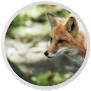 Red Fox Round Beach Towel by Lisa L Silva